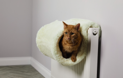 Aldi will be selling a cat radiator bed really soon and sorry, is there a human one on offer or?
