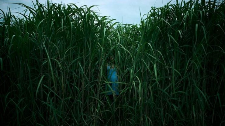 Netflix's new horror In The Tall Grass is chilling in parts, but ultimately a bit flat