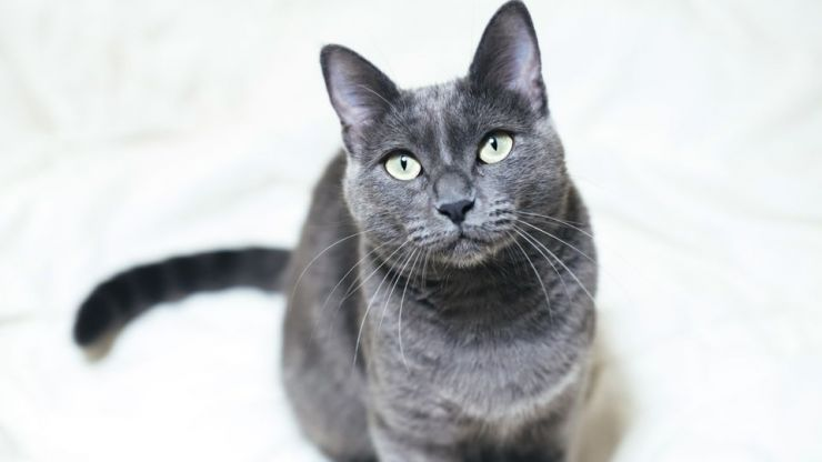 Here are the 10 most Insta-worthy cat breeds in the world so, did your kitty make the cut?