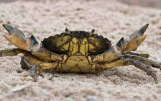 A live crab just sold at auction for $46,000 and we honestly don't know what to say