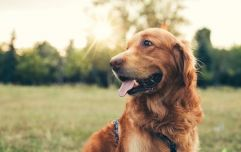 Irish charity seeks to employ courthouse dog to assist with children giving evidence