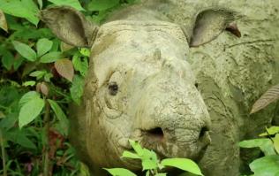 Malaysia's last Sumatran rhino has died