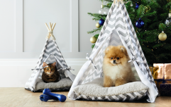 Pet teepees are now a thing, and we've never needed anything more in our lives