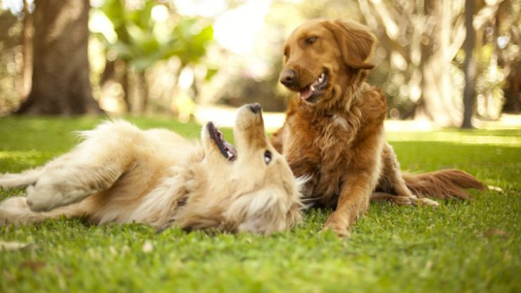 Fancy getting paid €35,000 a year to care for two gorgeous dogs?