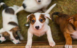 ISPCA urges public not to buy or give puppies as presents for Christmas