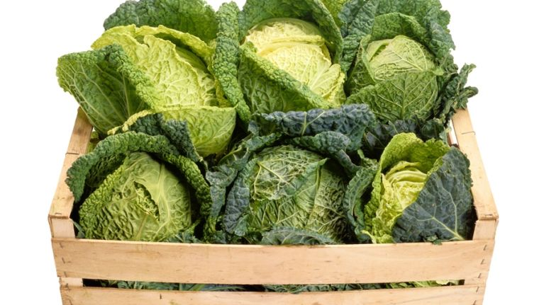 The New Super Foods: Research Reveals Cabbage and Milk may