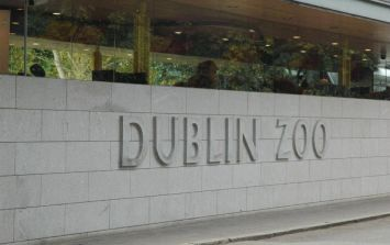 There's A Special New Arrival In Dublin Zoo... And You Can Help Name Her!