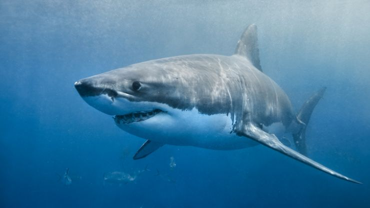 Sky is releasing a new three-part documentary about sharks that we're ready to sink our teeth into