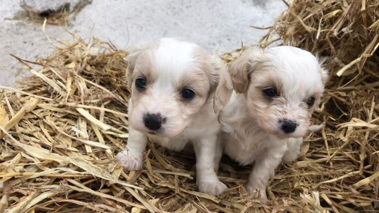 Appeal made for information after 14 dogs stolen in Limerick
