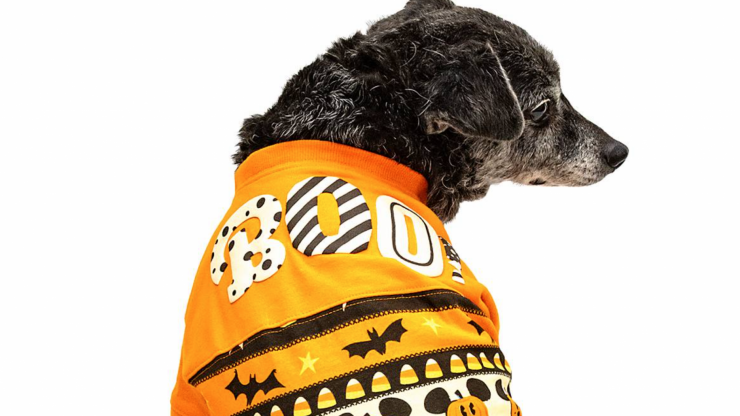 Disney are now selling matching dog and human Hallowe'en jumpers and yeah, we definitely need them