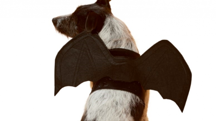 Lidl is stocking dog Halloween costumes next week and sorry now, how adorable?