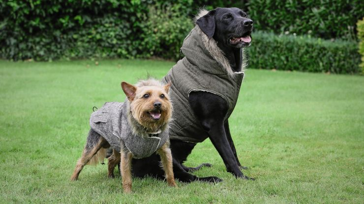 Aldi's pet event is back and yes, those are hooded parkas for dogs