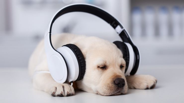 Spotify is releasing playlists and podcasts for your pets