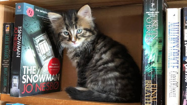 There's a Canadian bookstore filled with adorable kittens that you can adopt