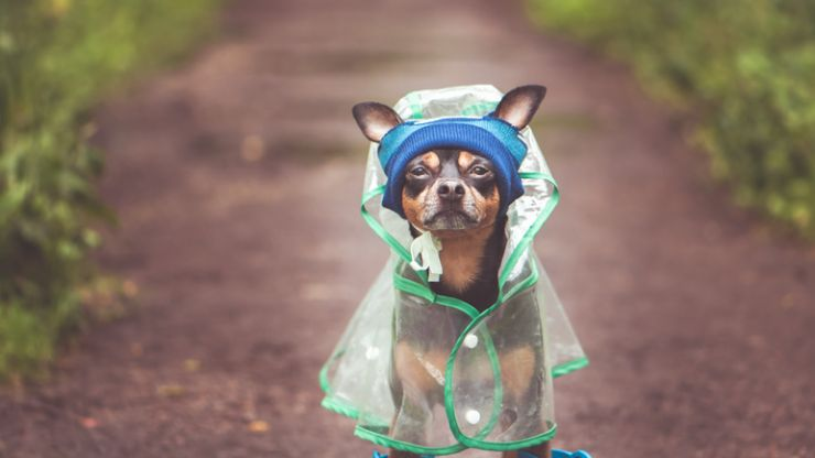 My heart, Penneys just dropped more adorable dog costumes including a lil' raincoat