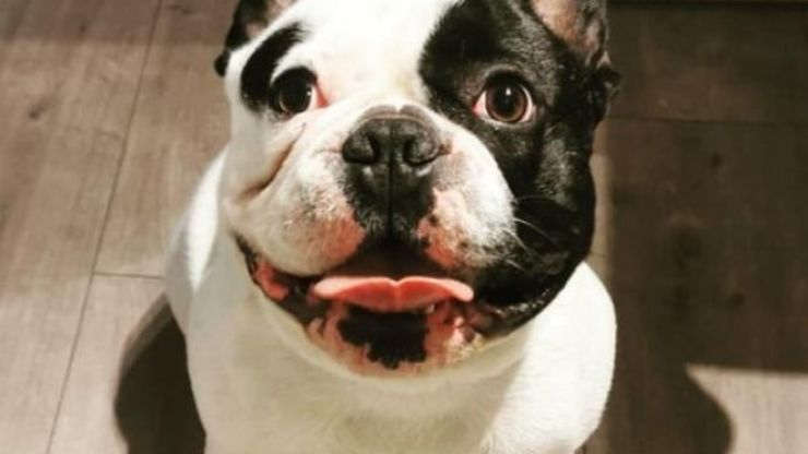 French bulldog reunited with owner following hammer attack in Cork