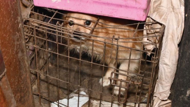 DSPCA seize over 140 animals kept in cages from Dublin petting farm