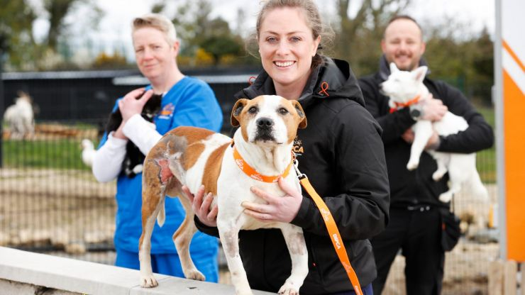 New RTÉ series goes behind the scenes at the DSPCA and it looks ridiculously adorable