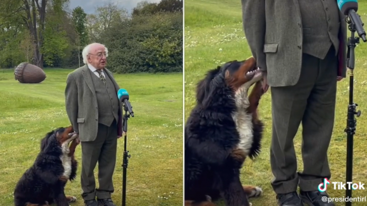 Michael D. Higgins' dog goes viral after trying to get some attention during TV interview