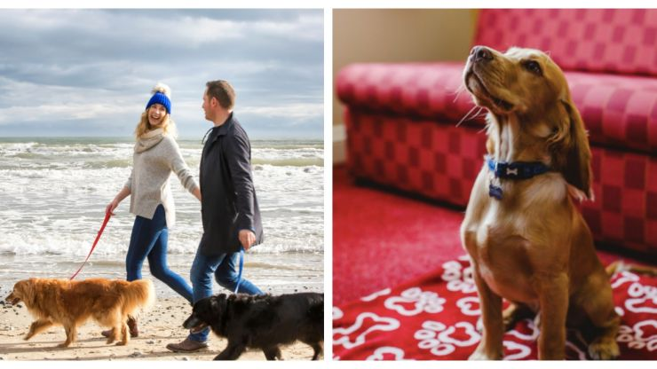 Fur babies welcome! 8 dog-friendly hotels in Northern Ireland to book into this summer