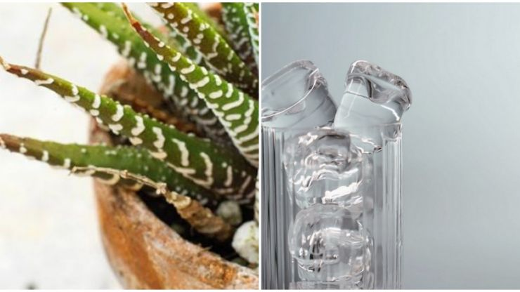 Forever killing your plants? Here's how an ice cube might just help keep them alive for longer