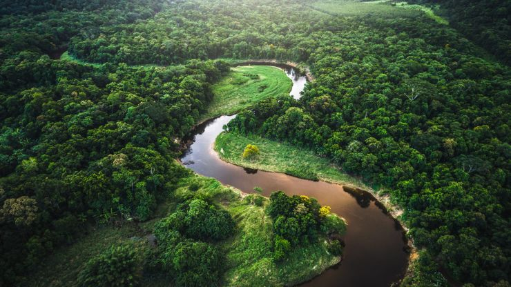 Amazon rainforest emitting more CO2 than it absorbs for first time