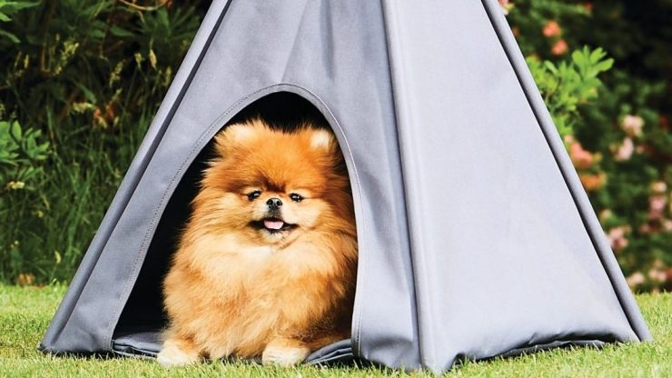 Aldi is selling an outdoor teepee for your dog