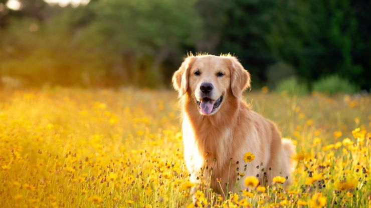 It's official - these are Ireland's most Instagramable dogs