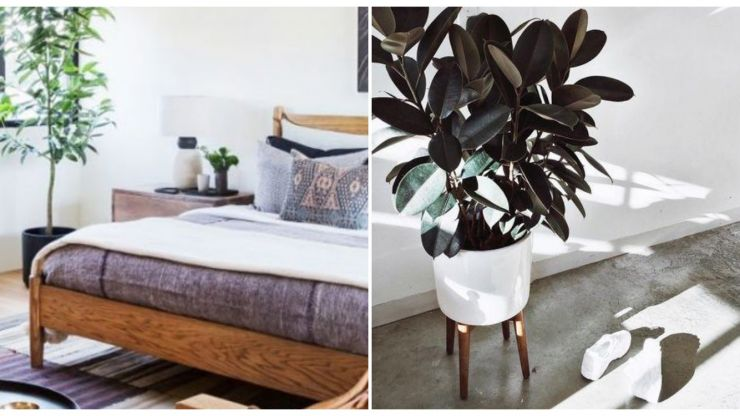 Waking up tired? The 5 houseplants that can help you get a better night's sleep