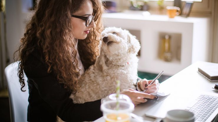 Dogs Trust encourages Irish workplaces to allow dogs in offices