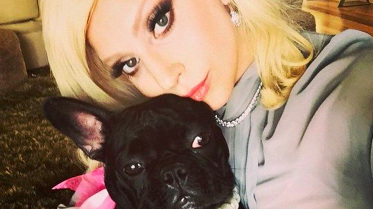Lady Gaga's dog walker shot as her two dogs are stolen