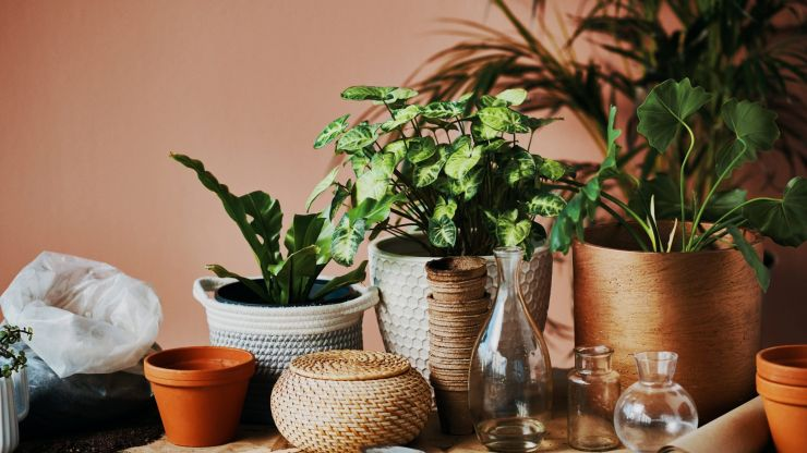 6 low-maintenance house plants that are impossible to kill