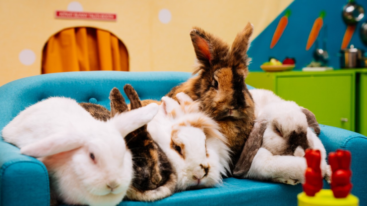 What's up Doc? The world's first rabbit reality show has just launched