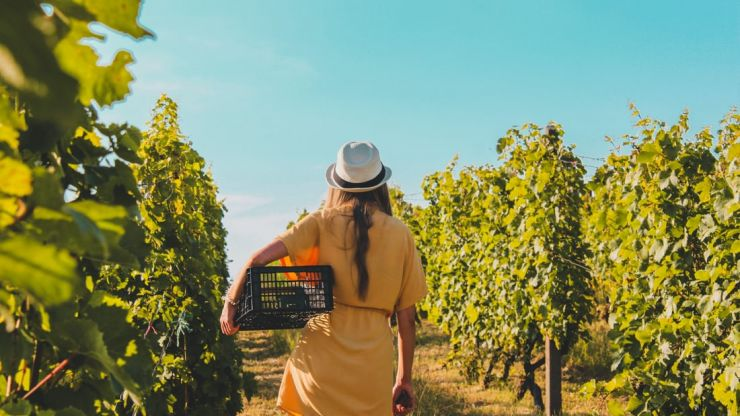 Winery offering $10,000 a month to drink wine and live rent free in California