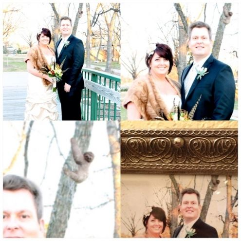 Wedding photobomb #4:  Sloths are not known for their extrovert character so being upstaged by one on your wedding day must be a real low point.