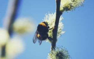 Suffer From Hay Fever? This New App Could Come In Handy!