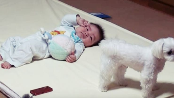 This Puppy Has Figured Out How to Hush A Crying Baby