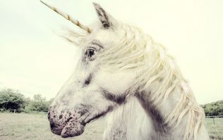 'Magical Unicorn Weekends' are happening in Ireland and we're going