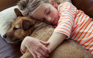More Kids, More Pets, More Happiness?
