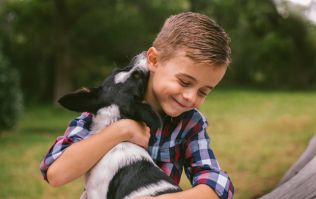 Thinking about a family pet? 4 questions to ask yourself first