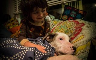 This adorable 8-year-old boy rescues street dogs in Mexico
