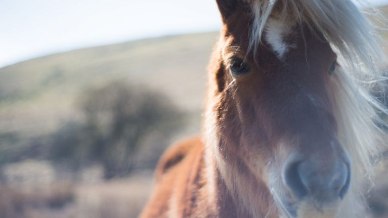 Dartmoor ponies help teens with challenging life and mental health issues