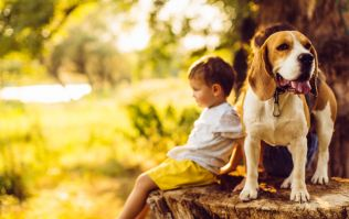 Children who have dogs experience less stress