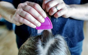 Head lice: everything you need to know and all your questions answered