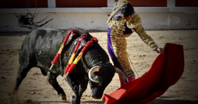 Matador 'trips on his cloak' and is fatally gored during a French bullfight