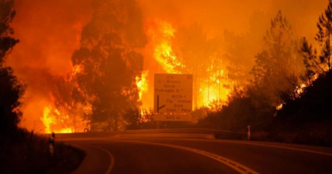 'The greatest tragedy of recent years:' Forest fires in Portugal kill 60