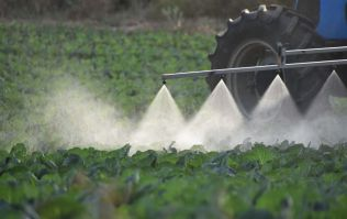 Pesticides could have link to birth abnormalities, says research