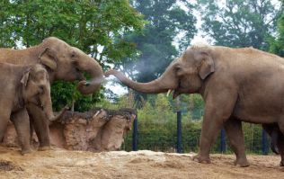 Dublin Zoo celebrate Grandparents' Weekend with this amazing event
