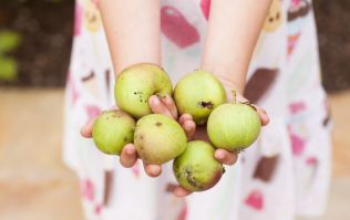 3 easy ways to help your children develop healthy eating habits