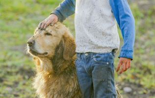 Children growing up with dogs less likely to suffer from mental health issues